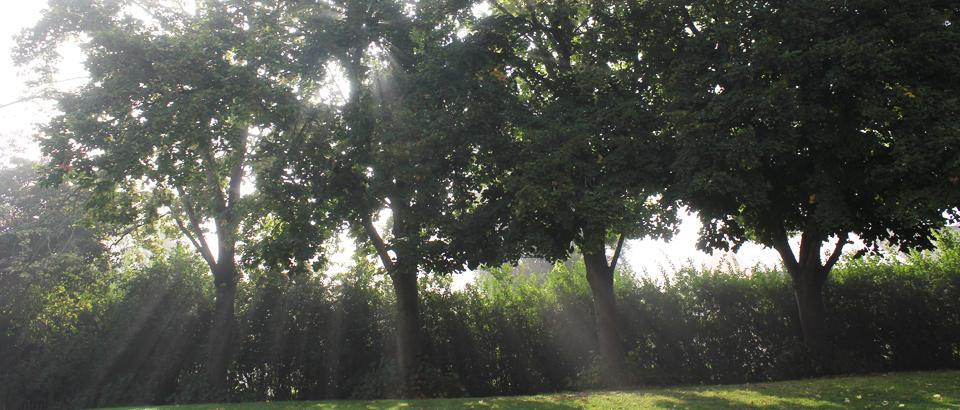 Bomen Zon